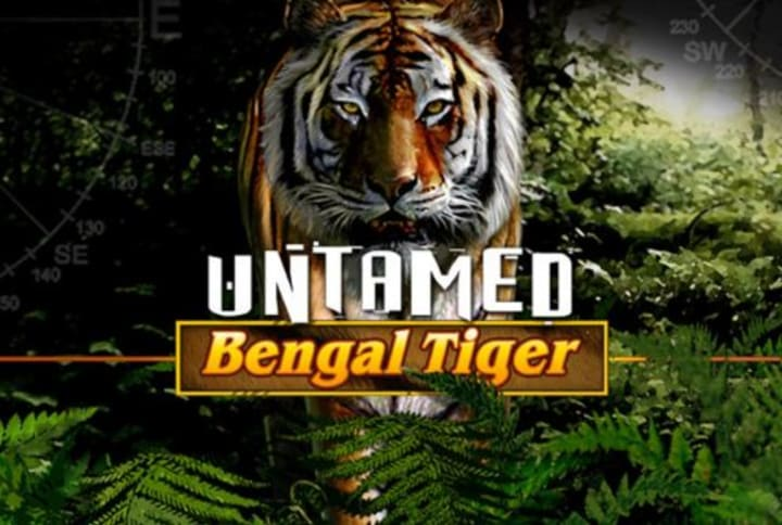Untamed Bengal Tiger